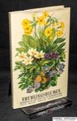 Schuhmacher, Fruehlingsblumen